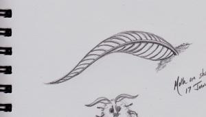 Moth sketch_NEW