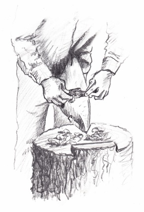 spokeshave-at-stump-sketch-scan_new